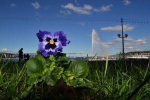 Plantez une fleur contre la violence